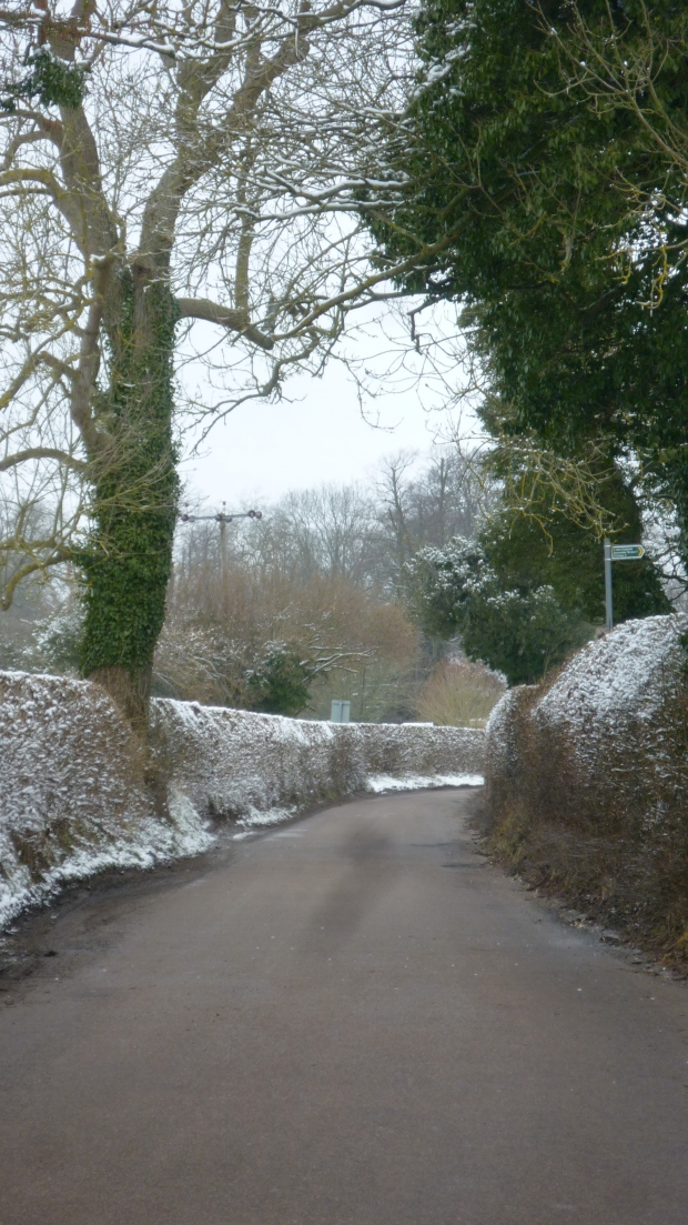 Aldbury hedgerow