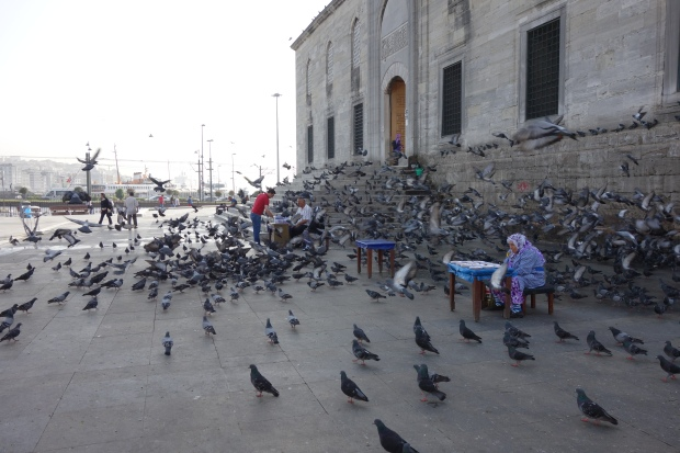 Pidgeons outside the spice market