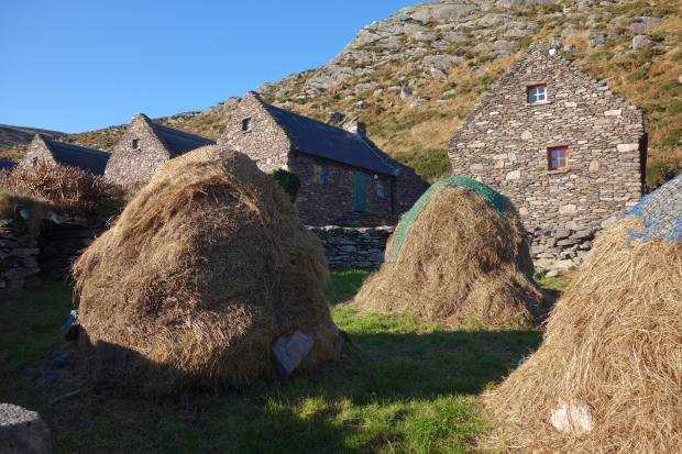hay collected infront of Cill Rialaig